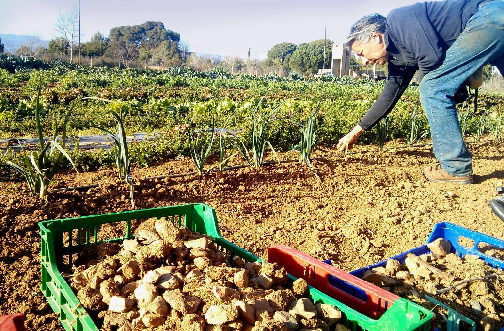 Diguesblat, pagesos i artesans agrupats en un mercat digital